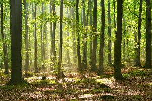 Woodland and Walking Festival at the Swinton Estate on September 7 and 8