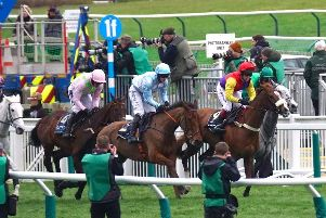 Ever fancied owning a racehorse?
