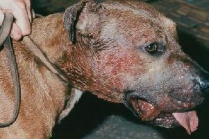 Illegal dog fighting in on the rise in Derbyshire.