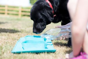 The RollaBowl helps keep pets hydrated on the go