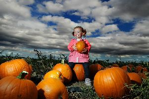Farmer Copleys Pumpkin Festival - don your wellington boots, wrap up warm and head to the fields for a fun filled day of good honest pumpkin related fun.