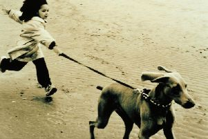 It is easier to teach a puppy from the early days how to behave when on-lead.