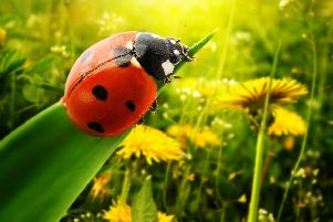 A 'plague' of ladybirds came to villages, towns and cities across the UK in incredibly large numbers.