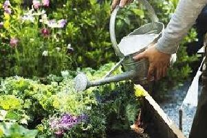 Tips on watering your garden