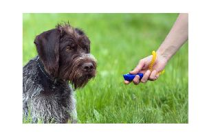 Five myths about positive reinforcement-based training