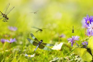 There are many things you can do to attract dragon flies to the garden