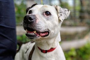 Paddy, who is a resident of the Cheesterfield RSPCA