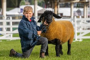 A young handler at the Great Yorkshire Show with his prized pedigree.