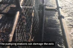 Mesh screens will be added to the water intake at Warkworth to help prevent eels being sucked in by the pumps. An image from the Northumbrian Water video.