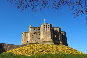 FIRST: A classic view of Warkworth Castle with the daffodils in bloom, by Harold Hann, a member of our Northumberland Camera Club Facebook group by photographer Ivor Rackham. 387 Facebook likes