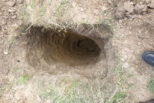 The badger sett. Photo: RSPCA.