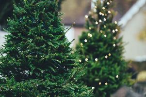Real Christmas trees will be collected again this year by Trinity hospice, who are now in need of volunteers. (Photo: Unsplash)