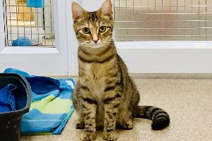 A vets has issued a warning after several cats were taken in with suspected anti-freeze poisoning.