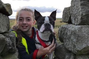 Murphy the Boston Terrier with owner Thea George (12). He has been missing for two weeks and his family are desperate to find him.