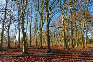 The Rotary Club of Pocklington is helping to sustain Primrose Wood by planting saplings and whips.