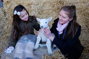 Lambing Sunday takes place at the college campus, near Beverley, between 11am and 3pm on Sunday, April 28.