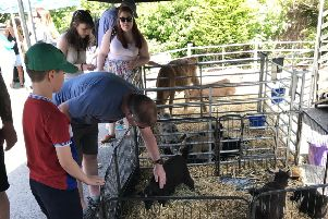 Visitors will be able to meet animals including a calf, lamb, piglet, rabbits, chickens, ducklings and even alpacas.