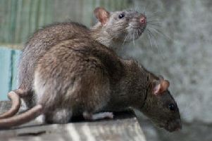 Rats are going to be making their way into houses in the winter.