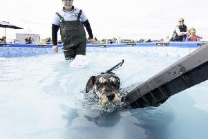 Casa Canine brought their pool, so the dogs could have a swim.