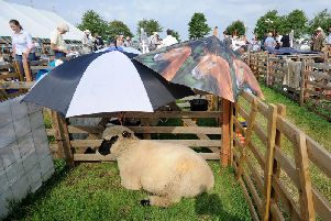 Umbrellas lend shade to sheep in the heat at Driffield Show. Picture by Simon Hulme.