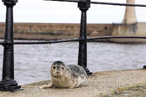 Just relaxing by the sea. Photo by Steven Lomas.