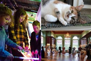 From purrfect fundraising to summer festivals - ten of the best things to do in Calderdale this weekend