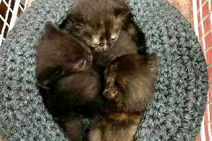 The kittens have made a full recovery