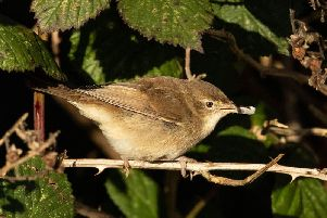Blyths reed warbler at Hope Carr Nature Reserve in Leigh. Pic: David Shallcross, chairman of Leigh Ornithological Society