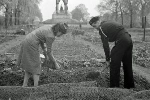 A woman and a Civil Defence Warden spread manure on their allotment in Kensington Gardens, 1942.