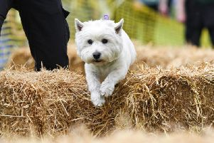 It's all paws on deck for Dogs Trust Merseyside's Fun Day