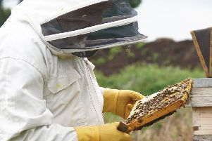 Commercial nursery Johnsons of Whixley is raising awareness of the importance of bees in the food production process.