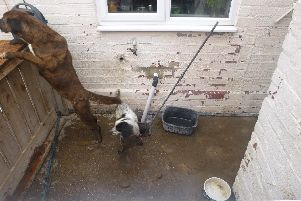"The dogs were found in ""shocking"" conditions in the yard of Chris Adam's home in Seaham."