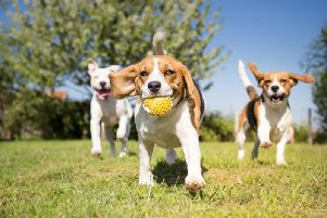 More than one in four people own a dog in the North West.
