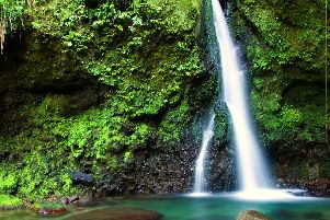 The Emerald Pool in Dominica.