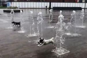 Bailey (front) and his brother Billy enjoy a splash in the Keel Square water feature every day.