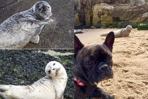 We have been loving your pictures of seals.