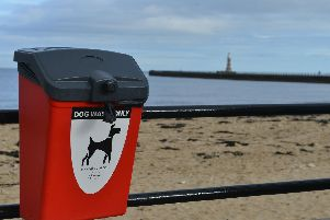 "Our letter writer believes our beaches are becoming ""doggy toilets""."