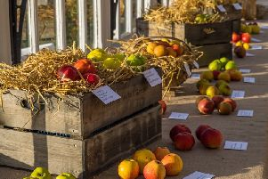 There will be the chance to celebrate the nation's favourite fruit at the Amazing Apple Day.