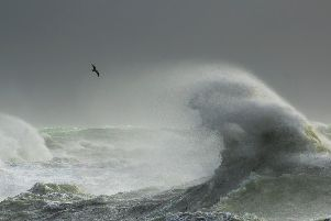 By Craig Denford, Storm Gull, Newhaven, East Sussex.