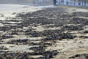 By 2021 the project aims to introduce UK (Scarborough) farmed seaweed into new markets such as bioplastics, biotextiles and pharmaceutical products.