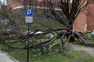 An interesting tree in the street outside the Wawel Royal Castle. I wonder how Amey would have dealt with this one? I think we all know.