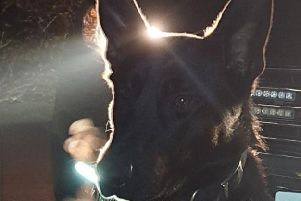 Police dog, Tyrion, tracked down a suspect wanted over a pub burglary in Sheffield