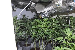 The cannabis farm discovered at Riding Close in St Helens