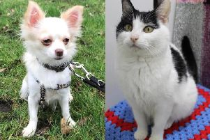 These animals at Halifax RSPCA are looking for a new home - can you help?