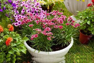 Let the flowers bloom in pots