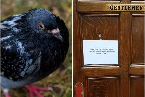 A sign asking toilet-goers to keep the door shut because of the birds was seen this week.