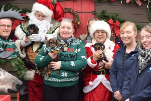 Colleagues at Notcutts Victoria invited rescue dogs from RSCPA Leeds & Wakefield District branch to experience their Santa Paws dog grotto
