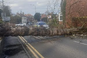 The tree is blocking the entire road.