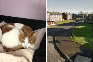A distraught pet owner has hit out at an evil motorist who purposely sped up to kill her pet cat in front of her eyes.