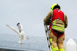 The gull was trapped in the netting on the roof of the new B&M store